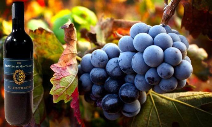 wine Brunello Di Montalcino il patrizio