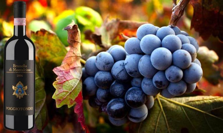 wine Brunello Di Montalcino poggiotondo